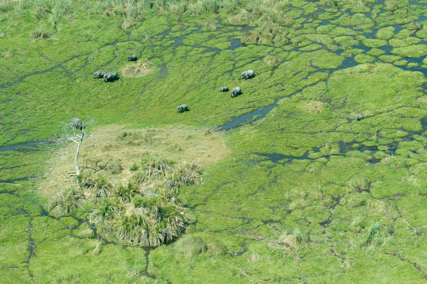 You are currently viewing Botswana – Into the Okavango