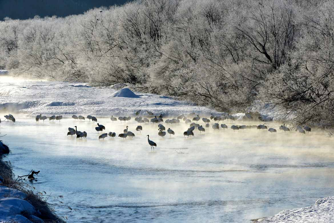 You are currently viewing Good Reasons to Visit Japan in the Winter