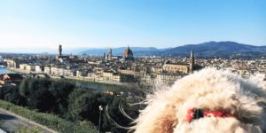Travel guide to visiting Rome with your dog