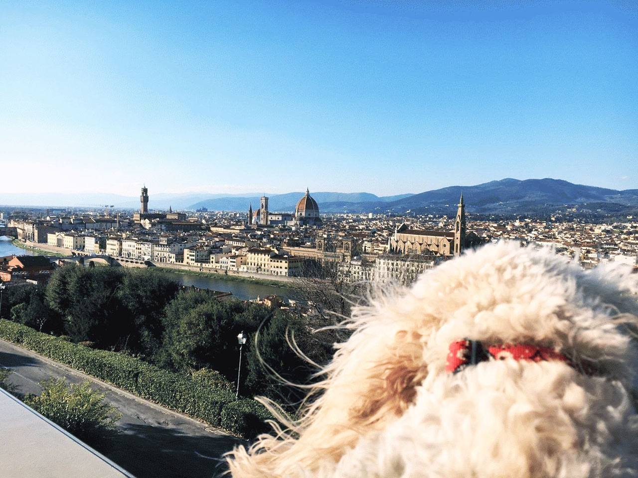 You are currently viewing Travel guide to visiting Rome with your dog