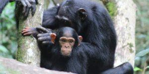 5 incredible primate and birding safaris in Uganda and Rwanda