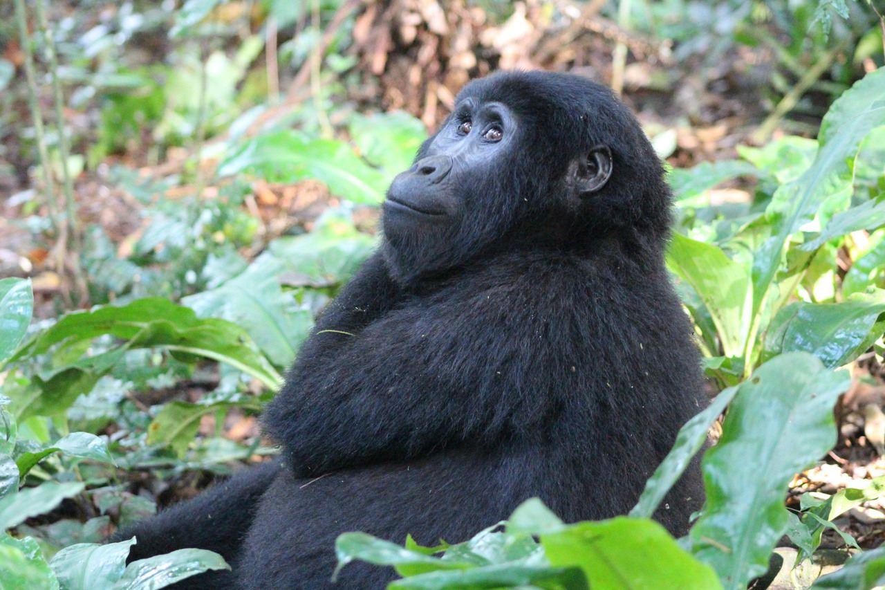 Uganda 12-day primate and wildlife safari with Kagera Safaris