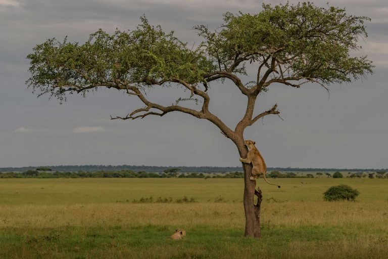 Tanzania's northern safari circuit – Travel Africa Magazine