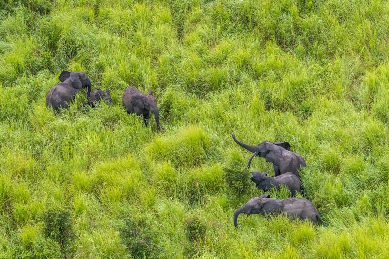 You are currently viewing Dogged work in Garamba – Travel Africa Magazine