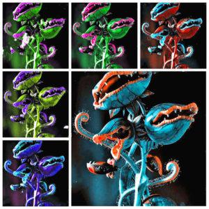 Egrow 100Pcs/Pack Flytrap Seeds Garden Potted Dionaea Muscipula Giant Carnivorous Plant Seeds