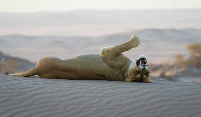 Sea lions – Travel Africa Magazine