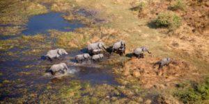 Botswana safari planner – Travel Africa Magazine