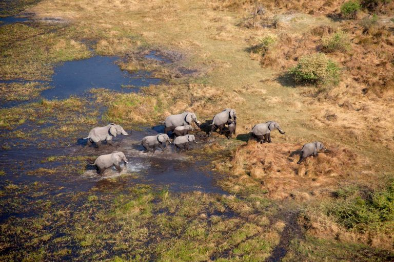 You are currently viewing Botswana safari planner – Travel Africa Magazine