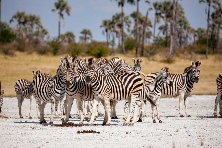 You are currently viewing Wildlife-watching highlights – Travel Africa Magazine
