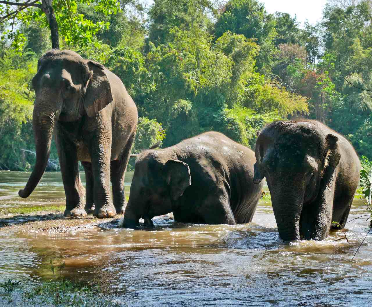 """Ethical Elephant Centres in Thailand where the word """"sanctuary"""" is more than a marketing ploy"""