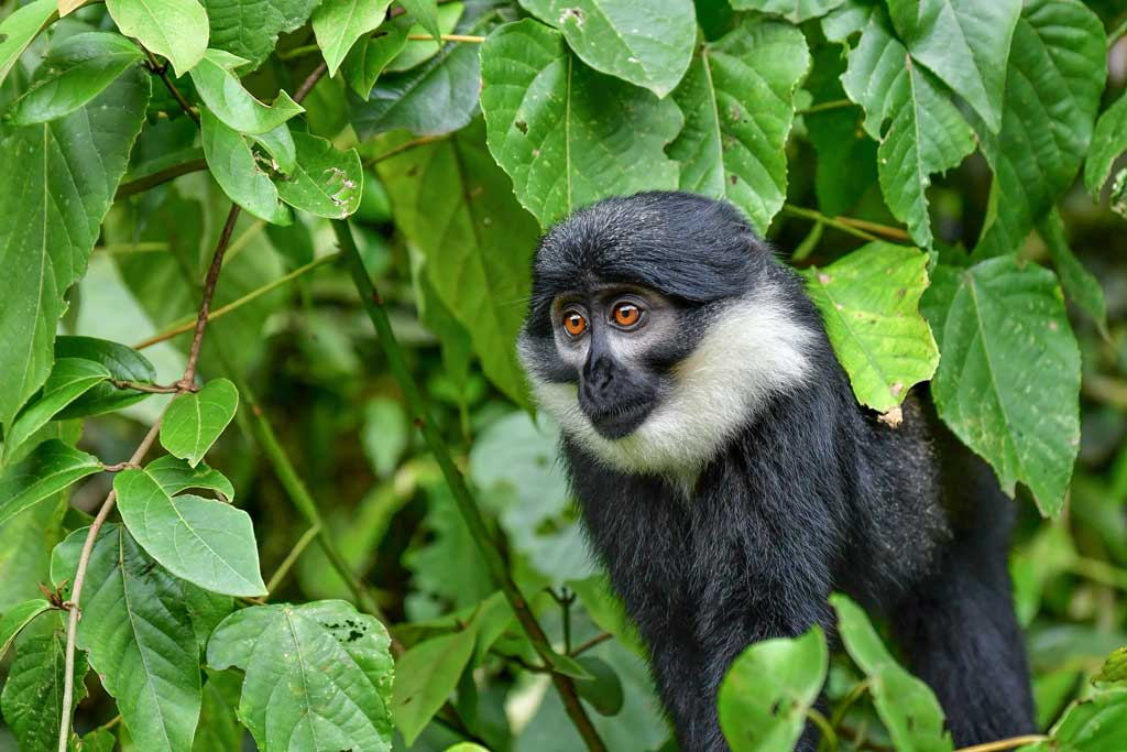 Best places to see primates