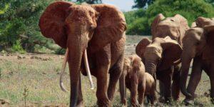 Wildlife drama – Travel Africa Magazine