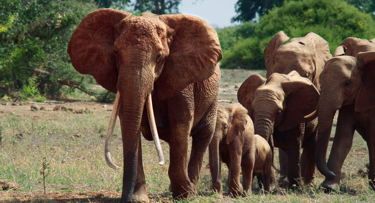 You are currently viewing Wildlife drama – Travel Africa Magazine