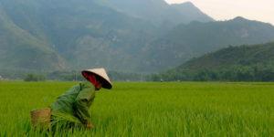 How do I apply for a Vietnamese visa? [2020 Update]