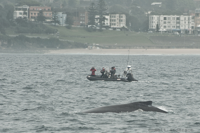 You are currently viewing Best Time Of Year To Go Whale Watching In Sydney