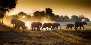 WIN a 4-night stay in Southern Africa for two with Jumbari Family Safaris worth almost £1800