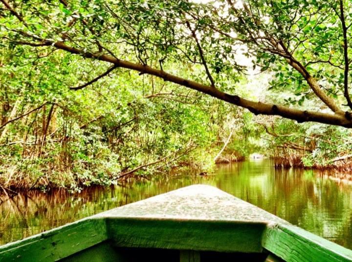 Discovering the Natural History of Trinidad and Tobago