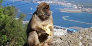 Why Gibraltar Rocks