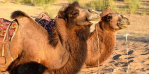 Why the Silk Road is the ultimate bucket list trip