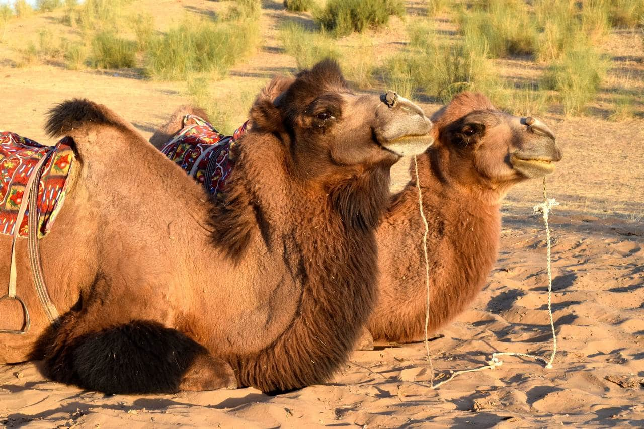 You are currently viewing Why the Silk Road is the ultimate bucket list trip