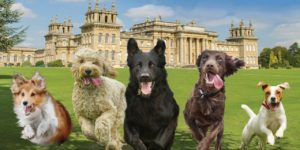 All About Dogs Paws at the Palace 2021