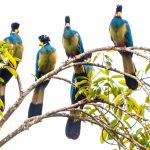 Discover the beauty of Uganda on one of these 5 wildlife safaris