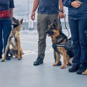 Miami International trials Covid-19 detector dogs